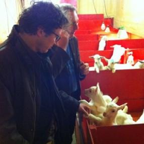De jonge geitjes bij boer Palland.